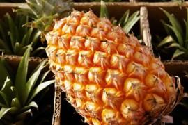 水果挑选小技巧:教你如何挑选菠萝